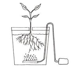 3 conceptos básicos de hidroponía #3: El sistema hidropónico.
