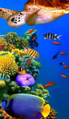 Best Pic | Underwater Fish, Fish Wallpaper, Beautiful Sea Underwater Animals, Underwater Painting, Underwater Fish, Underwater Creatures, Ocean Creatures, Colorful Animals, Colorful Fish, Tropical Fish, Fish Wallpaper
