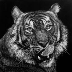 Tiger   5x5 scratchboard   Melissa Helene Fine Arts + Photography www.melissahelene.com #artwork #art #scratchboard #scratchart #wildlife #animal #animalart #endangeredspecies #conservation #conservationart #blackandwhite