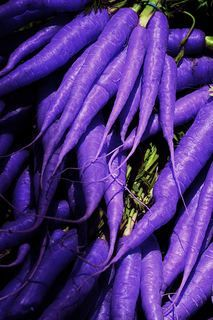 I've never seen a purple carrot..never hope to see one...but I can tell you anyhow...I'd rather see than be one!