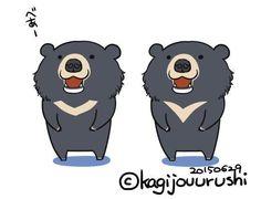 ニホンツキノワグマ(japanese black bear)とタイワンツキノワグマ(Formosan black bear)に外見の違いってあるのかしら?画像検索だと胸の模様が違うようにも見えたり見えなかったり・・・個体差?