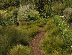 Native Plants, Garden Planning, Perennials, New Zealand, Garden Design, Bar, Landscape, Gold, Native Gardens