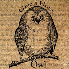 Adorable Little Owl Give a Hoot text typography words Bird Digital Image Download Sheet Transfer To Pillows Totes Tea Towels Burlap No. 1886