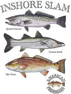 Live Bait, Salt Water Fish, Red Fish, Slammed, Habitats, Shrimp, Period, Fishing, Guitar