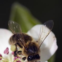 The Channel Islands Co-operative Society launches plan to help #bees