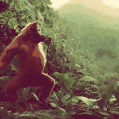 This Orangutan dances better than I do.