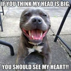 The Truth About Pit Bulls <3 #BIONIC Pet Products supports big dogs :) www.bionicplay.com