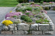 Country Gardener: June blooms: we're in fragrance heaven. A closer view of a part of the rock garden with pink creeping baby's breath, dianthus, alpine alyssum.