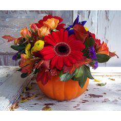 Party in my Pumpkin by Ben White Florist.