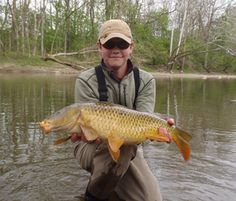1000 images about fly fishing guide service on pinterest for Mad river fishing