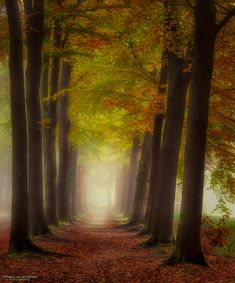 "Path of Miracles - Early morning, mist, mood, silence.....I love the forest more and more :) Best viewed on black (click image or press ""M"")"