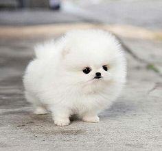Imagen de cute, dog, and white