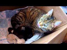 www.guardachevideo.it video 4385 inseriscono-un-cane-in-una-cucciolata-di-gatti:-la-reazione-della-mamma-e-stupefacente Puppies And Kitties, Cute Puppies, Cats And Kittens, Newborn Puppies, Newborn Kittens, Animals And Pets, Baby Animals, Cute Animals, Pitbull