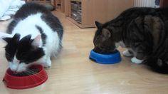 Kasper & Mini - Eating
