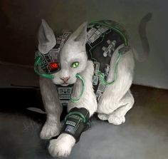 or this kitty as a borg from Star Trek