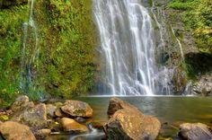 East Maui Waterfalls and Rainforest Hike
