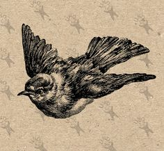 Clipart illustration Vintage Image Flying Bird Birdie Birds Printable Digital Image instant download HQ 300dpi PNG and JPG prints (JPG images are on a