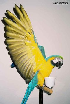 Why You Should Let Your Bird Fly: Bring out your parrot's athletic side for their physical and mental health.