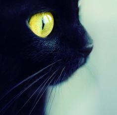 Reminds me of my first cat, moo moo lov u!