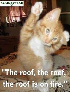 roofing meme cat raises roof