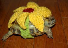 10 Turtle Dress Up Ideas Turtle Tortoises Tortoise