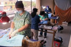 Veterinarians and veterinary technicians from the United States and Peru participated in a recent spay and neuter clinic in Huanchaco, Peru as part of The Perros Project.