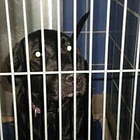 Pictures of MAUVE a Labrador Retriever Mix for adoption in Austin, TX who needs a loving home.
