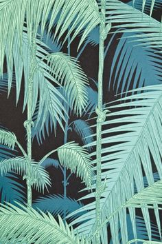 Contemporary Illustrated Palm tree design wallpaper in aqua on Black. From Cole and Son Contemporary Re/Styled Collection. Cole And Son Wallpaper, Of Wallpaper, Designer Wallpaper, Pattern Wallpaper, Wallpaper Backgrounds, Wallpaper Jungle, Phone Wallpapers, Motif Tropical, Tropical Pattern