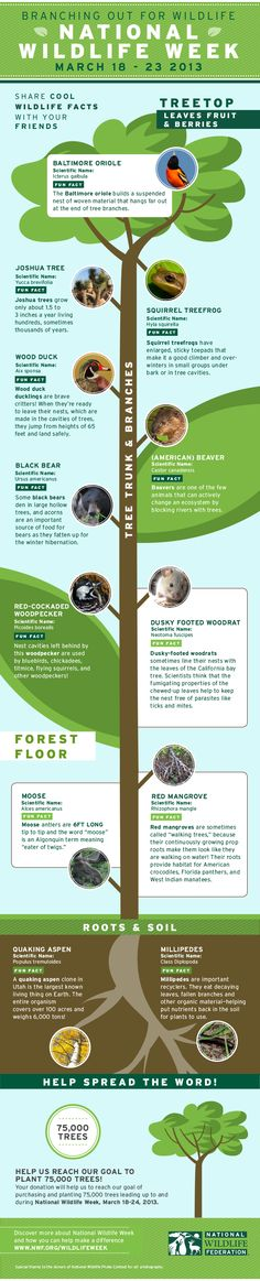 Our friends at the National Wildlife Federation have issued this cool poster with wildlife facts to celebrate national wildlife week.