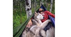 Camping With Dogs -niminen Instagram tili yllyttää ottamaan karvaisen kaverin mukaan telttaretkelle. Tässä 12 kuvaa inspiroimaan sinuakin lähtemään patikoimaan koirasi kanssa!  1. Reppureissaaja A perfect puppy in a pack. #campingwithdogs @obanwillett_thebordercollie PC: @christianannschaffer Kuva, jonka Camping With Dogs® (@campingwithdogs) julkaisi 16. 07ta 2016 klo 8.00 PDT  2. Sopu sijaa antaa – makuupussissakin …