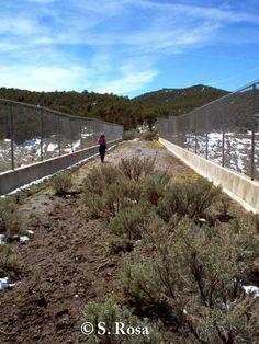 Wildlife overpass (7 m wide) Beaver, Utah. Note mule deer path in foreground. Photo credit: S. Rosa.