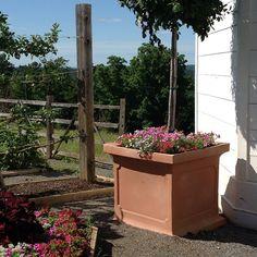 Farm chic #mossmountainfarm #joy #crescentgarden #provenwinners #pallensharethebounty
