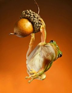 Animal photography is one of the most dangerous forms of photography. A good quality animal photo depends upon the skills of a photographer and the perfect Funny Frogs, Cute Frogs, Les Reptiles, Reptiles And Amphibians, Beautiful Creatures, Animals Beautiful, Animals Amazing, Frosch Illustration, Funny Animals