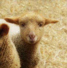 Natural wool roving  white needle felting by WondrousWools on Etsy, $5.00