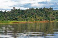 En la cuenca del San Juan crece una densa selva húmeda.