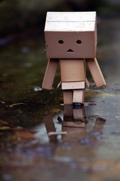 Danbo in a Puddle