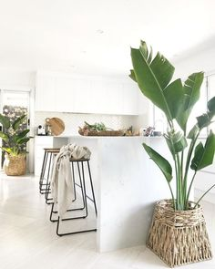 30+ Pretty Indoor Plants Design For Your Interior Home