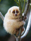 The Most Beautiful Animals You've Never Heard Of
