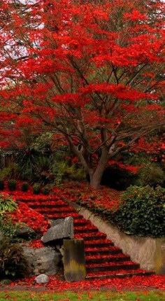 ☮ * ° ♥ ˚ℒℴѵℯ cjf Red Leaves, Fall Leaves, Red Tree, Stairways, Park Landscape, Autumn Park, Red Pictures, Stone Steps, Autumnal