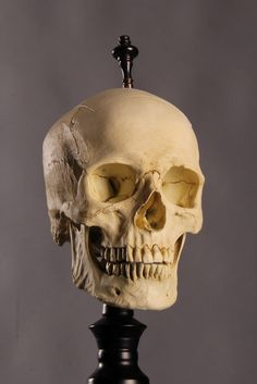 Hey, I found this really awesome Etsy listing at https://www.etsy.com/listing/186881489/custom-made-skull-lamp