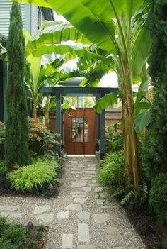 """Banana palms side garden""  ""Love garden...sub troppo garden...Display Garden"""
