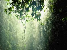 raining pictures kerala, thekkady monsoon tour packages