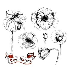 Poppy flowers sketches in different positions vector - by Lemuana on VectorStock®