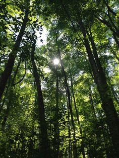 Sunlight peeking through the trees at ETAR