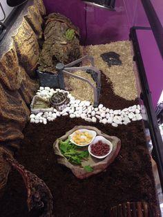 The popularity of tortoises as pets has increased over time. Tortoise House, Tortoise Habitat, Tortoise Table, Tortoise Terrarium, Turtle Terrarium, Turtle Care, Pet Turtle, Tortoise Enclosure Indoor, Box Turtle Habitat