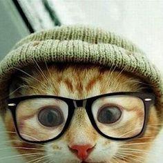 Cute Cat kitten-Pray to god
