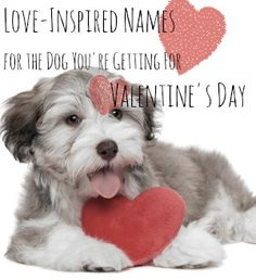10 Love-Inspired Names for the Dog You're Getting for Valentine's Day