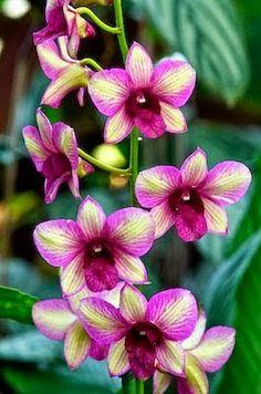 Random color orchid
