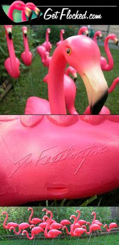 "Home of the Original ""Don Featherstone"" designed pink plastic lawn flamingos. Accept NO Imitations! 