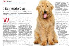 Designer honden: aparte kruisingen   De Uitgelaten Hond - Online Honden Tijdschrift